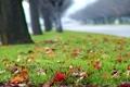 Картинка дорога, осень, трава, деревья, газон, размытость, разноцветные