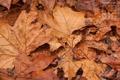 Картинка осень, november, ноябрь, календарь, листва, листья, 2012