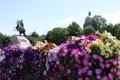 Картинка цветы, Питер, памятник