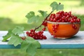 Картинка garden, currants, Fruit, Garten