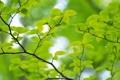 Картинка зеленые, лист, листочки, лето