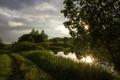 Картинка лето, трава, закат, дерево, болото, вечер, кустарники