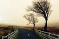Картинка дорога, деревья, дождь