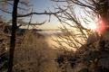 Картинка зима, иней, солнце, лучи, снег, дерево, ветка