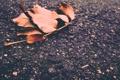 Картинка зима, асфальт, листья, Осень, орех