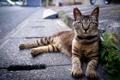 Картинка кот, дорога, улица, кошка
