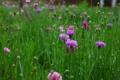 Картинка цветы, цветение, листики, васильки