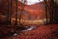 Картинка ручей, лес, осень, деревья.