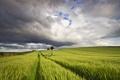 Картинка поле, лето, небо