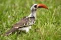 Картинка трава, природа, птица, клюв