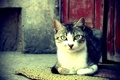 Картинка кот, глаза, нос, шерсть, фото, цвет, обои