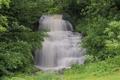Картинка лес, поток, каскад, водопад Кларендон, Clarendon Falls