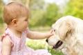 Картинка трава, радость, цветы, детство, игры, ребенок, собака