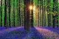 Картинка лес, трава, солнце, лучи, деревья, цветы