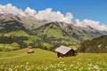 Картинка трава, солнце, облака, деревья, цветы, горы, холмы