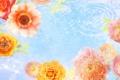 Картинка вода, коллаж, обои, роза, лепестки