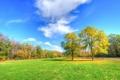 Картинка осень, деревья, травка, время года