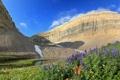 Картинка горы, небо, озеро, цветы