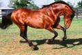 Картинка конь, красивый, копыта
