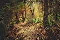 Картинка листья, деревья, природа, фото, дерево, леса