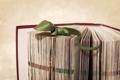 Картинка ящер, книга, оригами