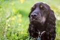 Картинка трава, друг, собака, чёрная
