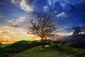 Картинка трава, закат, дерево, вечер, холм, арт, лиса