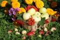 Картинка цветы, корзина, яблоки, рябина, калина, флоксы, бархатцы