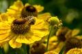 Картинка макро, цветы, пчела, лепестки, насекомое