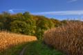 Картинка дорога, поле, осень, лес, небо, кукуруза