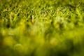 Картинка природа, зелень, трава, макро