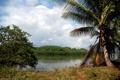 Картинка лес, пальма, река