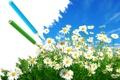 Картинка зелень, небо, цветы, креатив, ромашки, карандаши