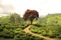 Картинка дорога, зелень, лето, деревья, пейзаж, природа, поля