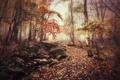Картинка осень, мост, туман, парк