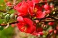 Картинка капли, цветы, роса, ветка, лепестки