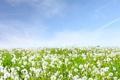 Картинка трава, небо, природа, пейзажи, поля, цветы
