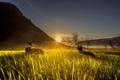 Картинка собаки, трава, лучи, закат, горы, долина, сонце