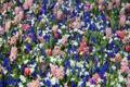 Картинка цветы, красота, парк цветов Кекенхоф