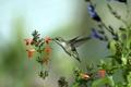 Картинка природа, птица, цветы