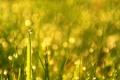 Картинка трава, капли, bokeh