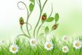 Картинка небо, трава, листья, цветы, green, божья коровка, ромашки