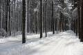 Картинка trees, snow, road, winter