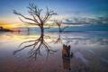 Картинка море, небо, облака, закат, дерево, берег
