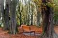 Картинка осень, листья, парк, скамья