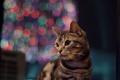 Картинка кот, взгляд, фон, котэ, котейка