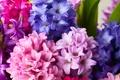 Картинка цветы, букет, гиацинты
