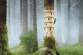 Картинка лес, природа, туман, птица, дятел, творение