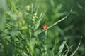 Картинка лето, насекомые, Природа