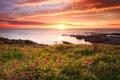 Картинка море, пейзаж, закат, цветы